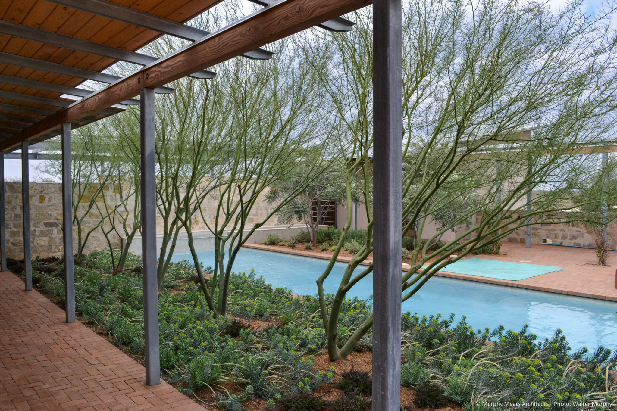 inner courtyard pool surrounded by brick paver terrace with palo verde trees in desert landscaping